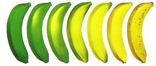Стадии спелости банана Кавендиш