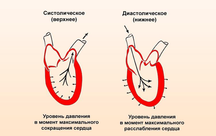 типы артериального давления