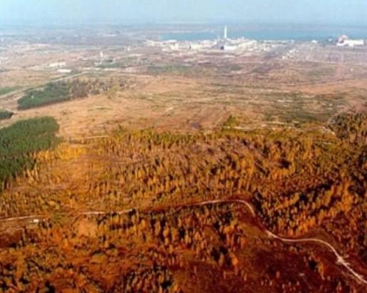 рыжий лес после аварии на ЧАЭС